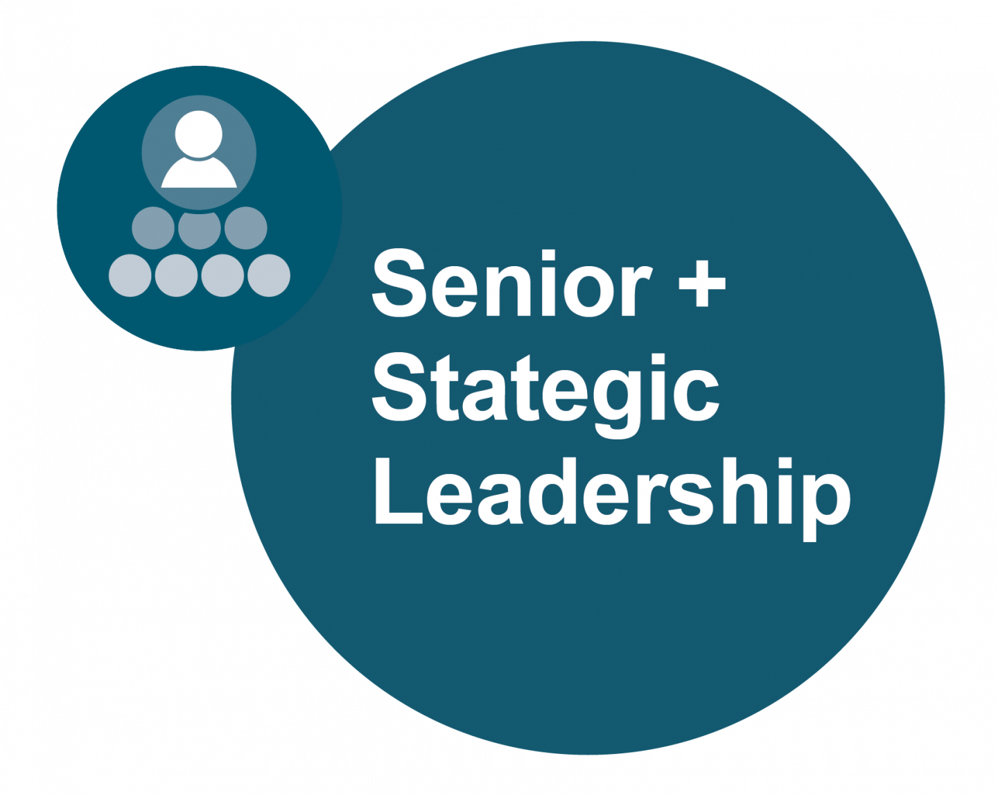 circle senior + strategic leadership